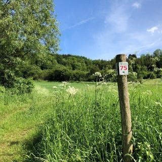 Wanderweg Nr. 75 Naturpark Südeifel