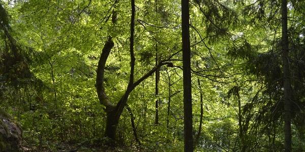 Lehto Karkalin luonnonpuistossa