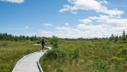 Views of the Bog Trail walkway