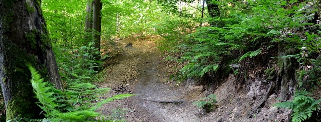 Weg durch den Teutoburger Wald