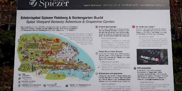 Einstieg in den Erlebnispfad Spiezer Rebberg.