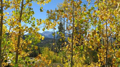 Quaking Aspen from the Ridge Trail