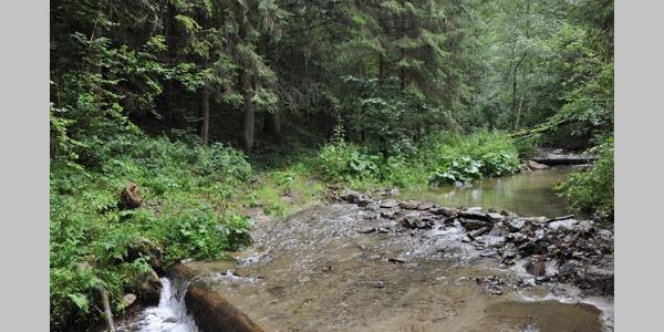 Bachüberquerung Stodlhofer Mühle
