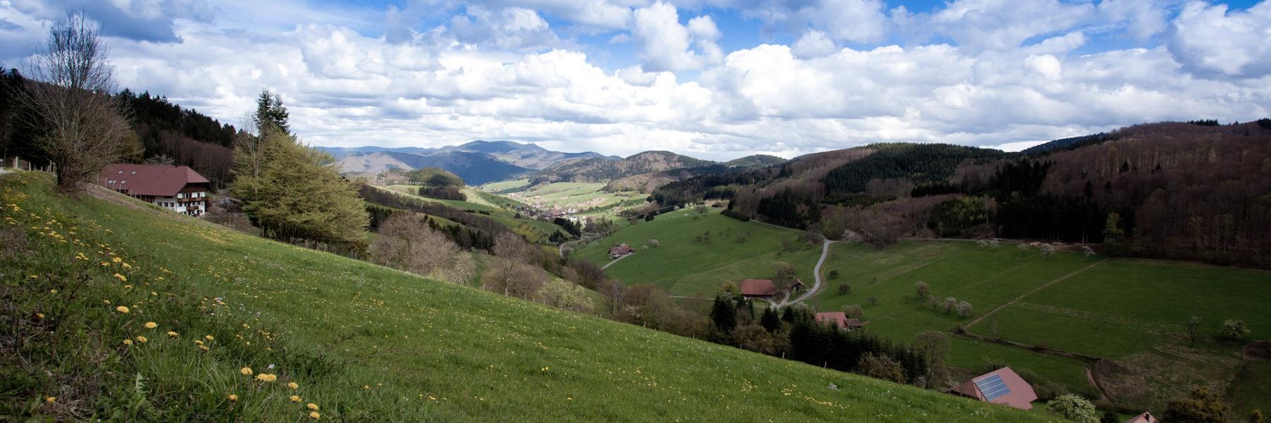 Waldwirtschaft am Kandelhöhenweg