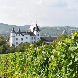 Blick auf Schloss Berg