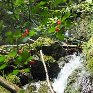 Zejmarská dolina / voda a skály