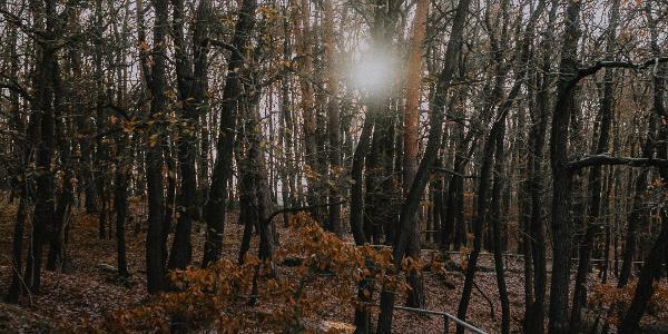Auch im Winter/Herbst eine lohnenswerte Route: Weg oberhalb der Mühle