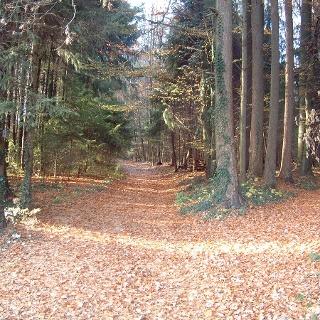 Waldweg Bodolz