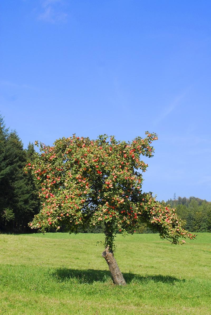 Über Rotensol ins Holzbachtal (KONUS)
