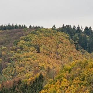 Aussicht Saar-Hunsrück-Steig
