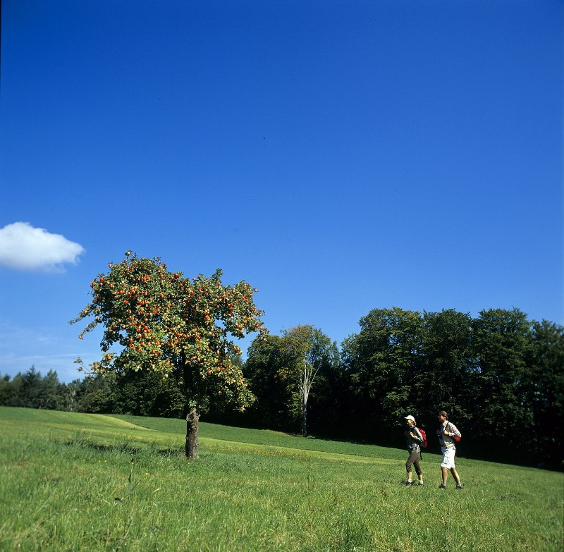 Rundtour über das Holzbachtal (KONUS)