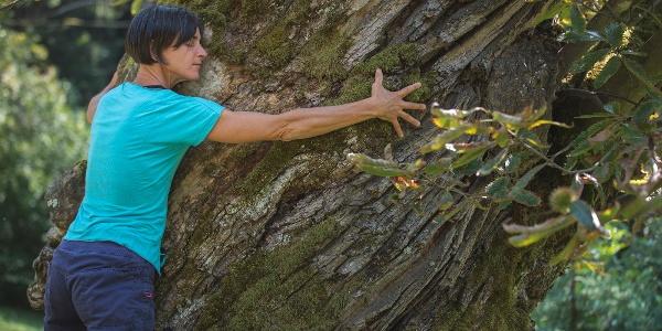 Abbraccio agli alberi: castagno secolare a Carisolo