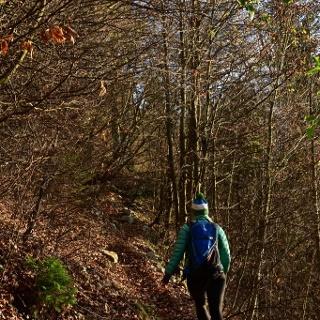 L'inizio del percorso attraverso il bosco