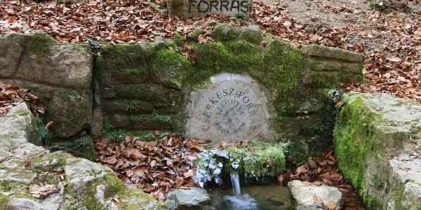 A Cserkész (Eta-forrás) a Kőlyuki-barlang szomszédságában ered