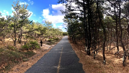 The trail begins with a ride through coastal pine forests.