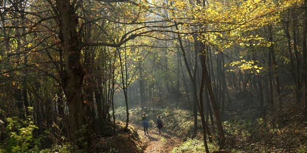 A romos erdészház után, Vokány felé ereszkedve