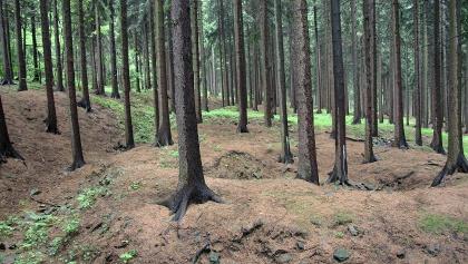 Bergbaulandschaft Hoher Forst - Halden und Pingen