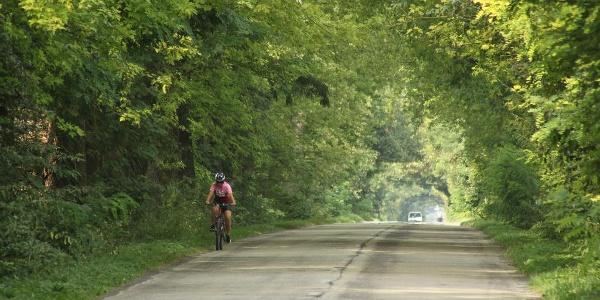 Zöld alagút a Kisoroszi felé vezető úton