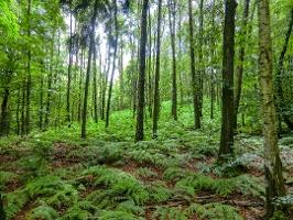 Foto Gesunder Wald an der Nordseite des Gohrisch