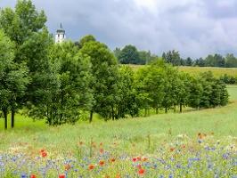 Foto Farbenfrohe und duftende Wiesen am Fuß des Papststeins - hinten die Kirche in Papstdorf