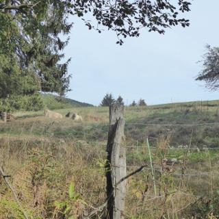 Ziegenwiese