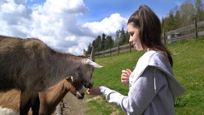 Ziegen füttern auf dem Gläsernen Bauernhof
