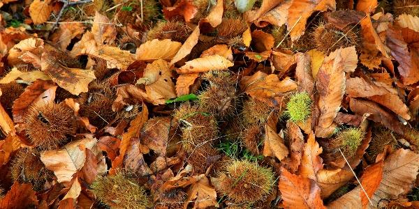 Der Kastanienweg ist im Herbst besonders schön.
