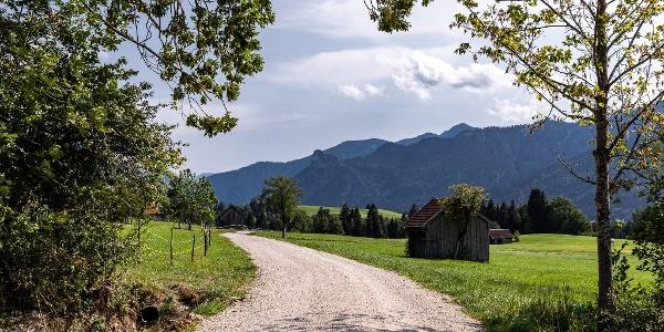 Schotterweg durch Wiesen der Ammergauer Alpen