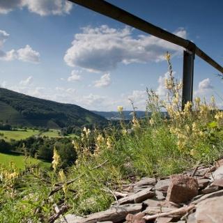 Wein und Schiefer am Wegesrand im Ruwertal