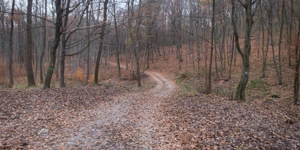 Csend és nyugalom az erdő mélyén
