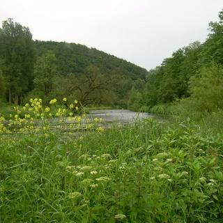 Sieg nahe Dattenfeld (Juni 2012)