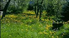 Calw - Schweinbachtal-Tour