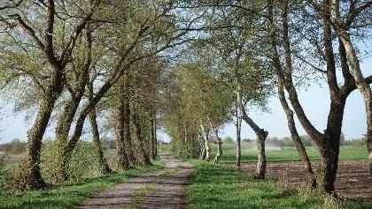 Tarmstedter Moor, Weidedamm