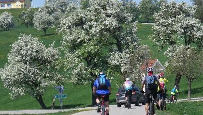 Blühende Birnbäume - weiße Pracht