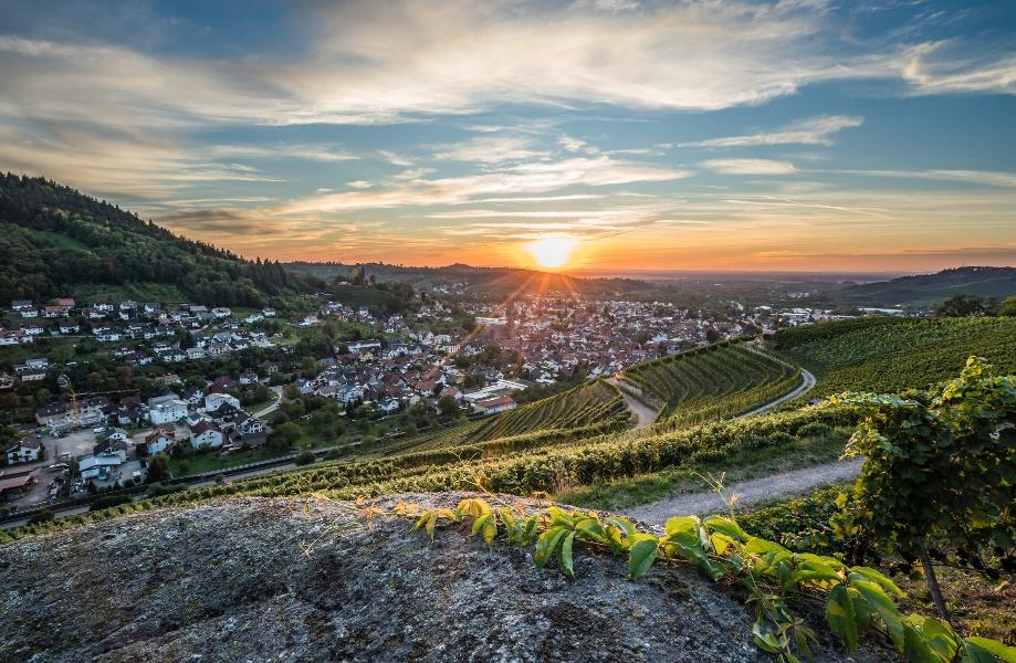 """Kappelrodeck - Weinwanderung rund um das """"Rotweindorf"""" (Offizielle Tour)"""