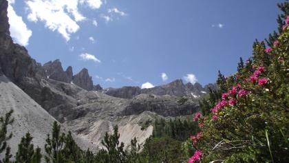 Blühende Alpenrosen im Altensteintal.