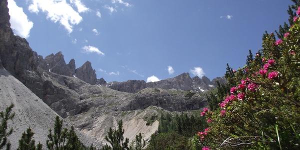 Blühende Alpenrosen im Altensteintal