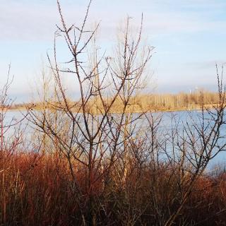 Blick über den Grabschützer See
