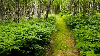 Walking the trail to Benjies Lake