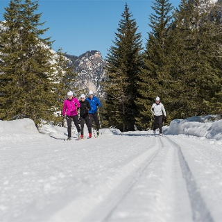 cross country ski
