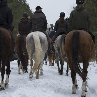 Wenn Sie im Winter durch die mecklenburg-vorpommerschen Wälder spazieren entdecken Sie oftmals die Spuren der Pferde im Schnee