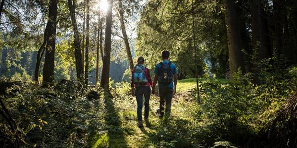 Wanderung im Wald beim Chapfensee