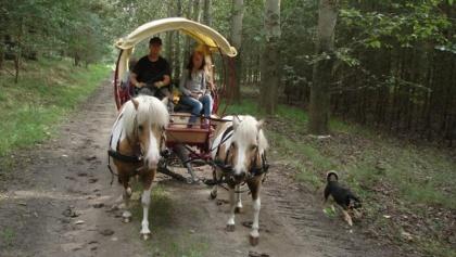 Mal auf dem Wagen, mal im Sattel- gemeinsames Wanderfahren mit Nichtreitern und Reitern