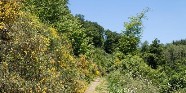 In der Eifel - Wanderimpressionen