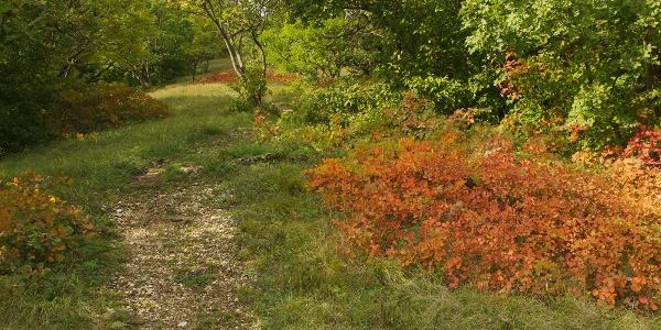 Cserszömörcés karsztbokorerdő ősz elején