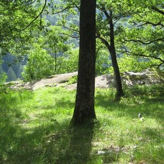 Mystischer Tiergartenhügel mit Steinheiligtum