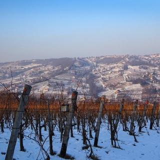 Bartina teljesítménytúra - szekszárdi szőlők között