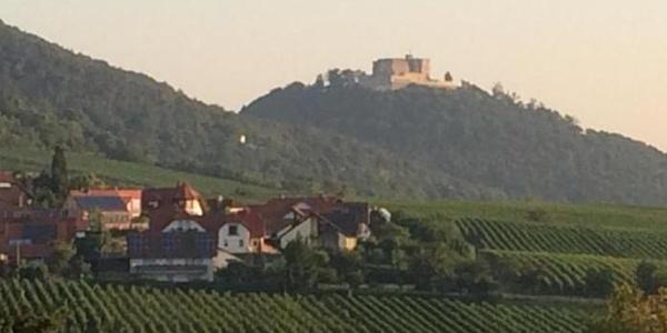 Blick zur Maxburg (Hambacher Schloß)