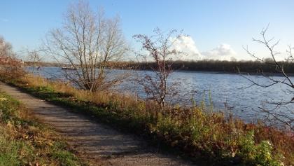 Die Wanderung bietet schöne Wege entlang des Rheins