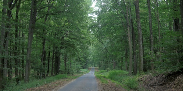 A Tormaföldéről vezető erdészeti út